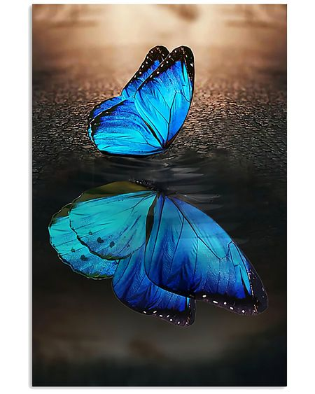 Amazing blue butterfly on water reflection wall art poster
